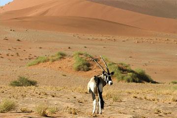 desert-national-park-jaisalmer